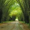 lancetilla-botanical-garden-by-adalberto.h.vega-for-gadling