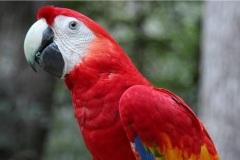 1_Flora-y-fauna-en-Honduras_480_311-1